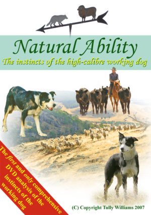 Natural ability sheepdog instincts dvd