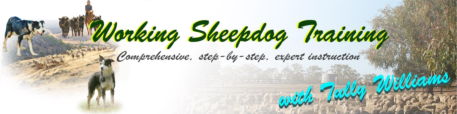 Working sheepdog training videos header image