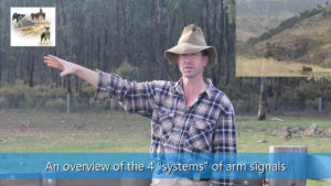 Overview of the 4 systems of sheepdog training arm signals video thumbnail