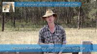 stationary directions sheepdog training video thumbnail