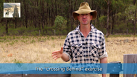 stationary directions sheepdog training video thumbnail