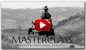 Masterclass Working Sheepdog Training Video Thumbnail
